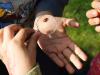 Artistes en Herbe - Eté / Haute-Loire thumbnail